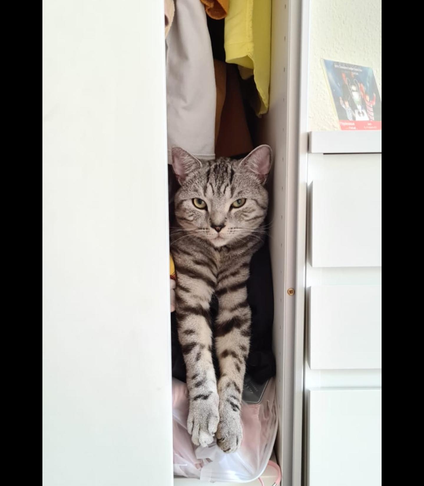 Котяка - из шкафа выглядака
