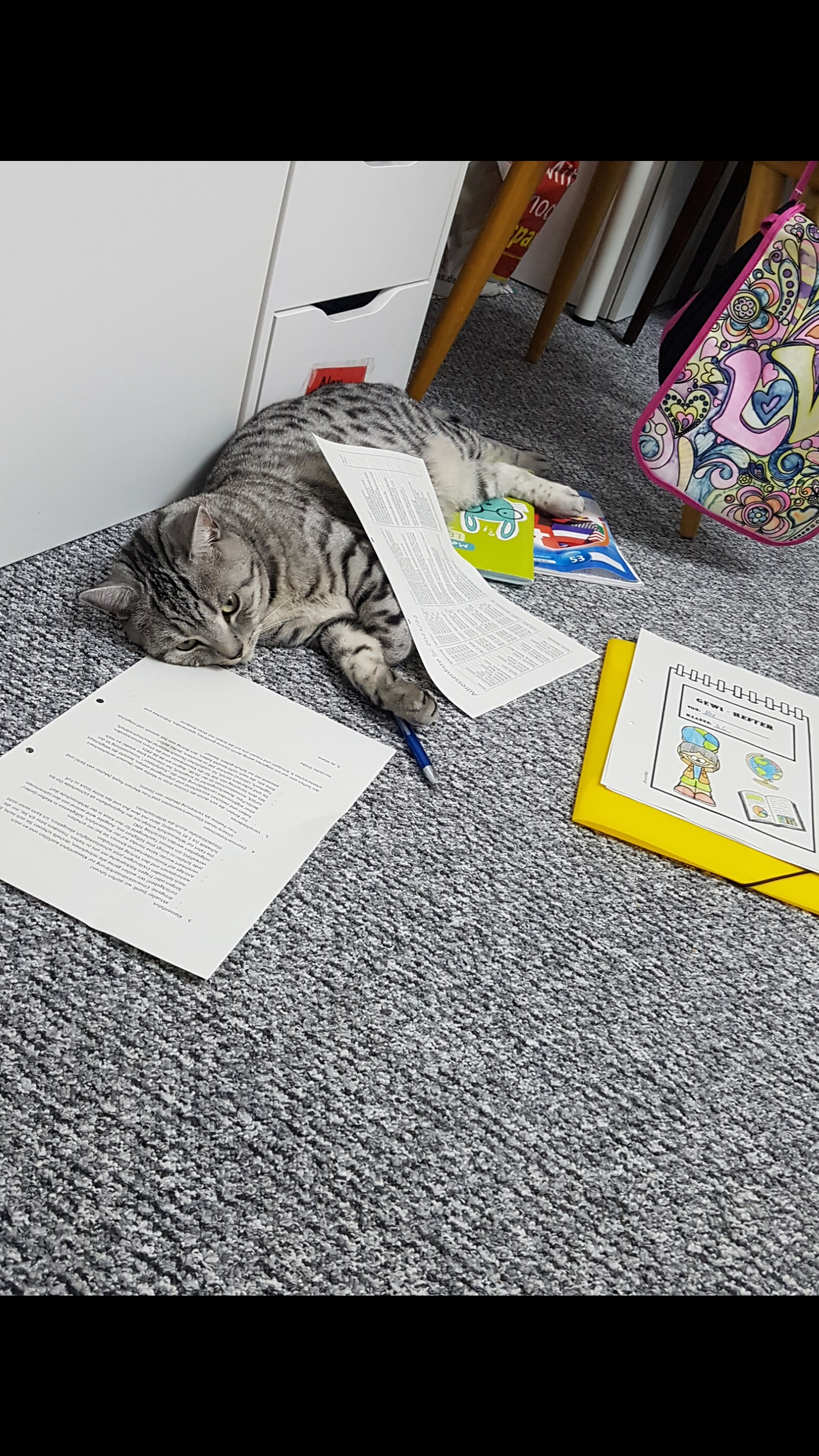 Котяка - писака...