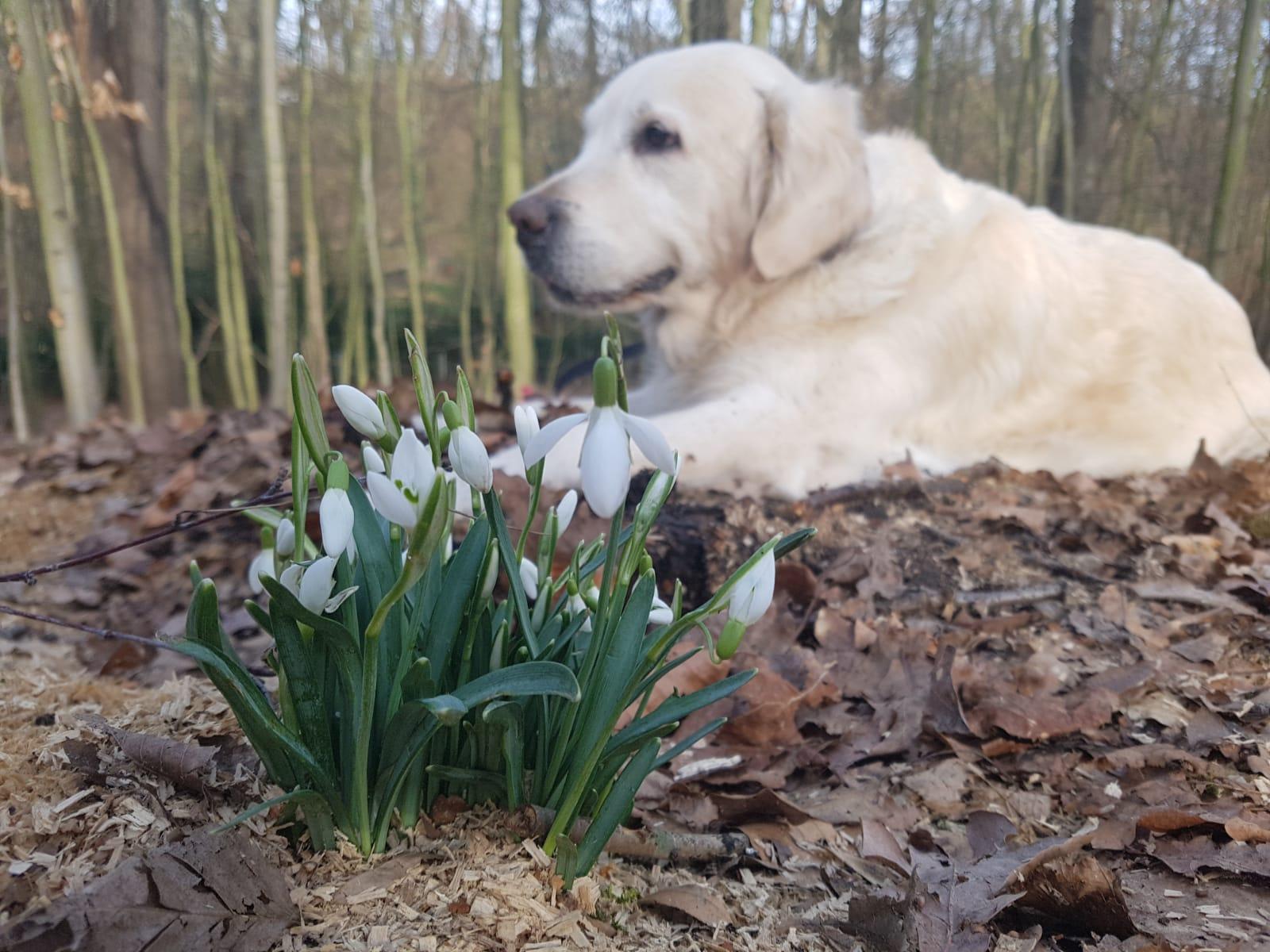 Собака в цветах - то что нужно для весеннего настроения