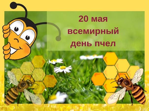 Сегодня всемирный день пчёл — международный праздник, отмечаемый 20 мая