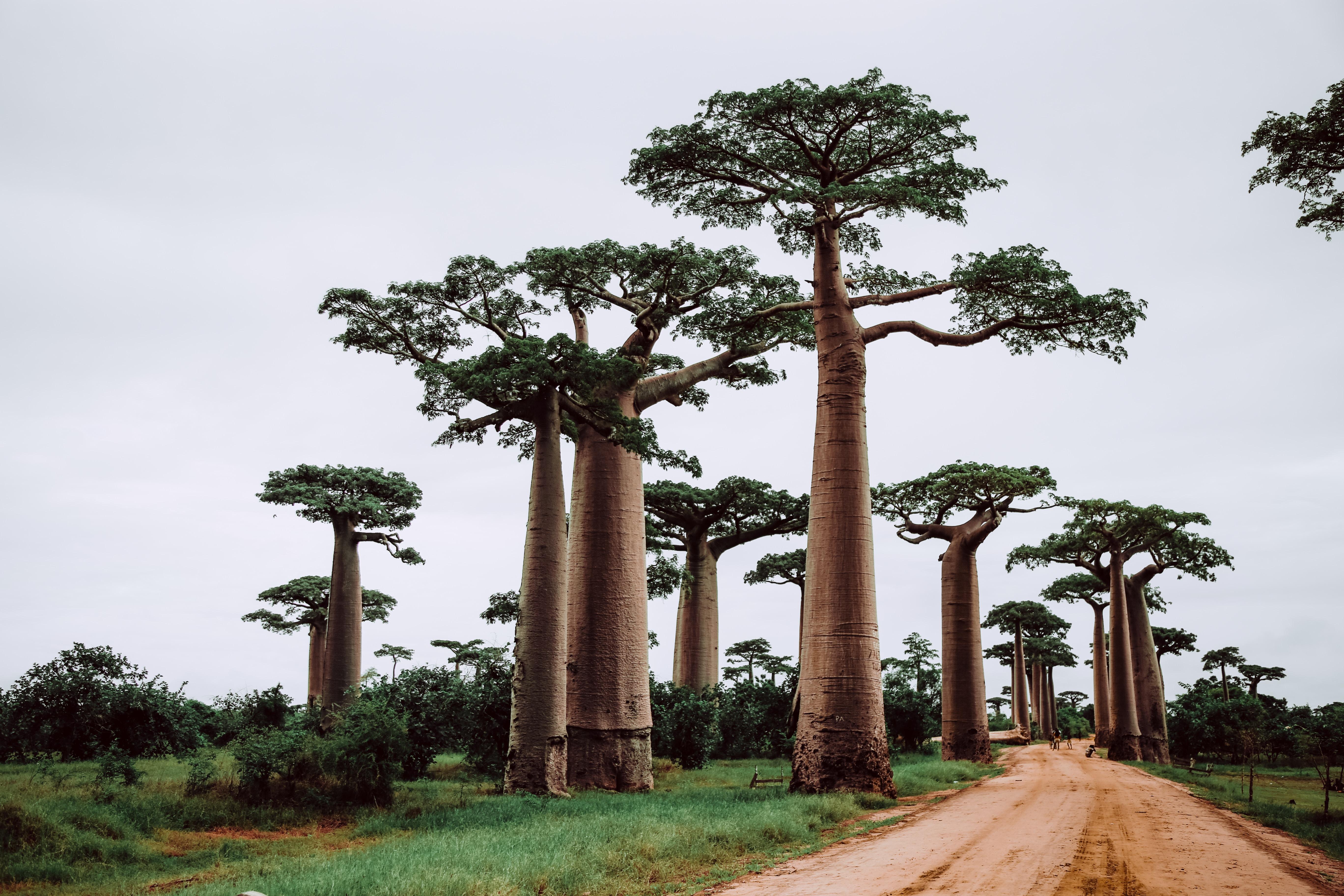 Мадагаскар- 5 захватывающих вещей, чтобы исследовать в стране острова