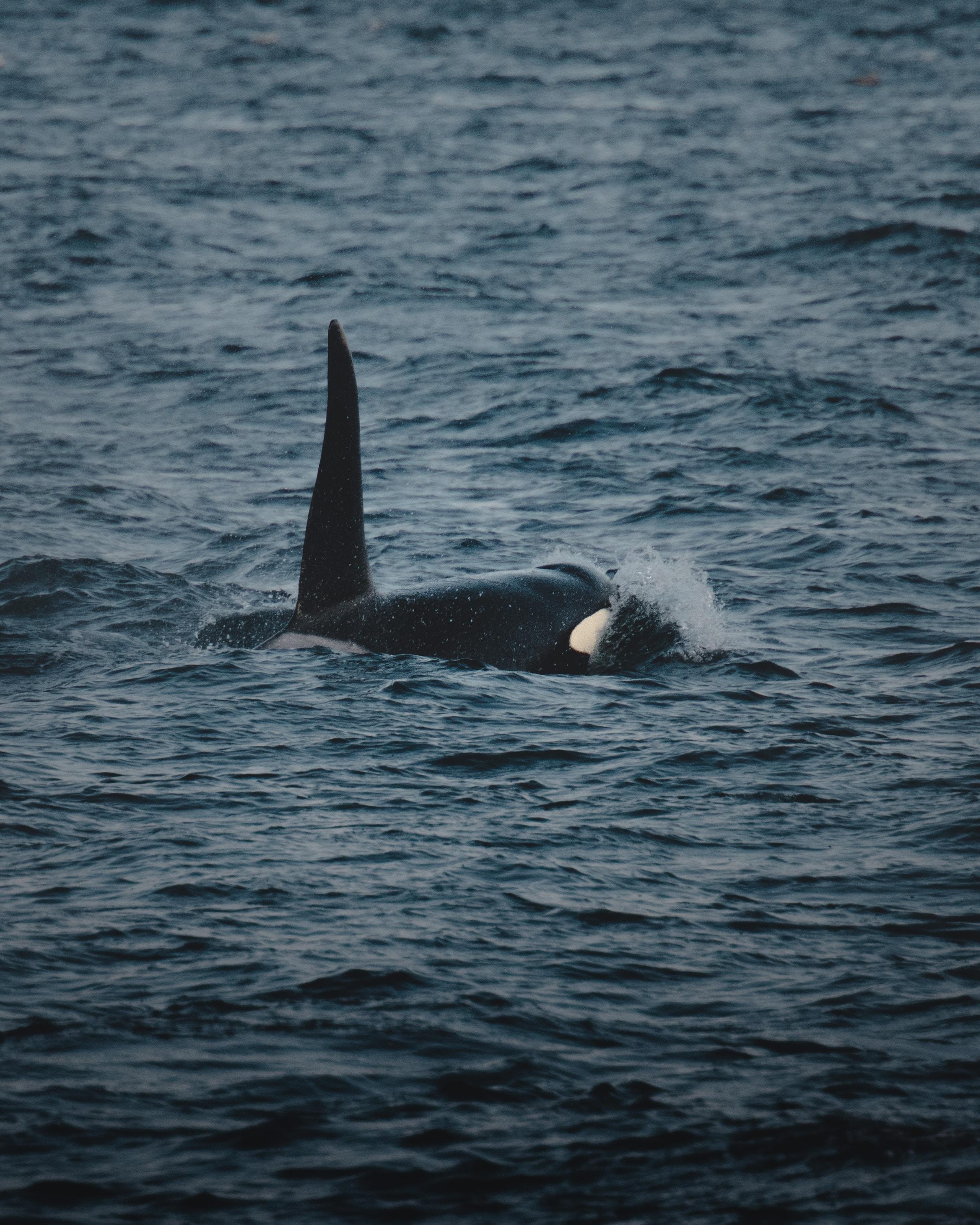 Исследуйте воды с китами акул