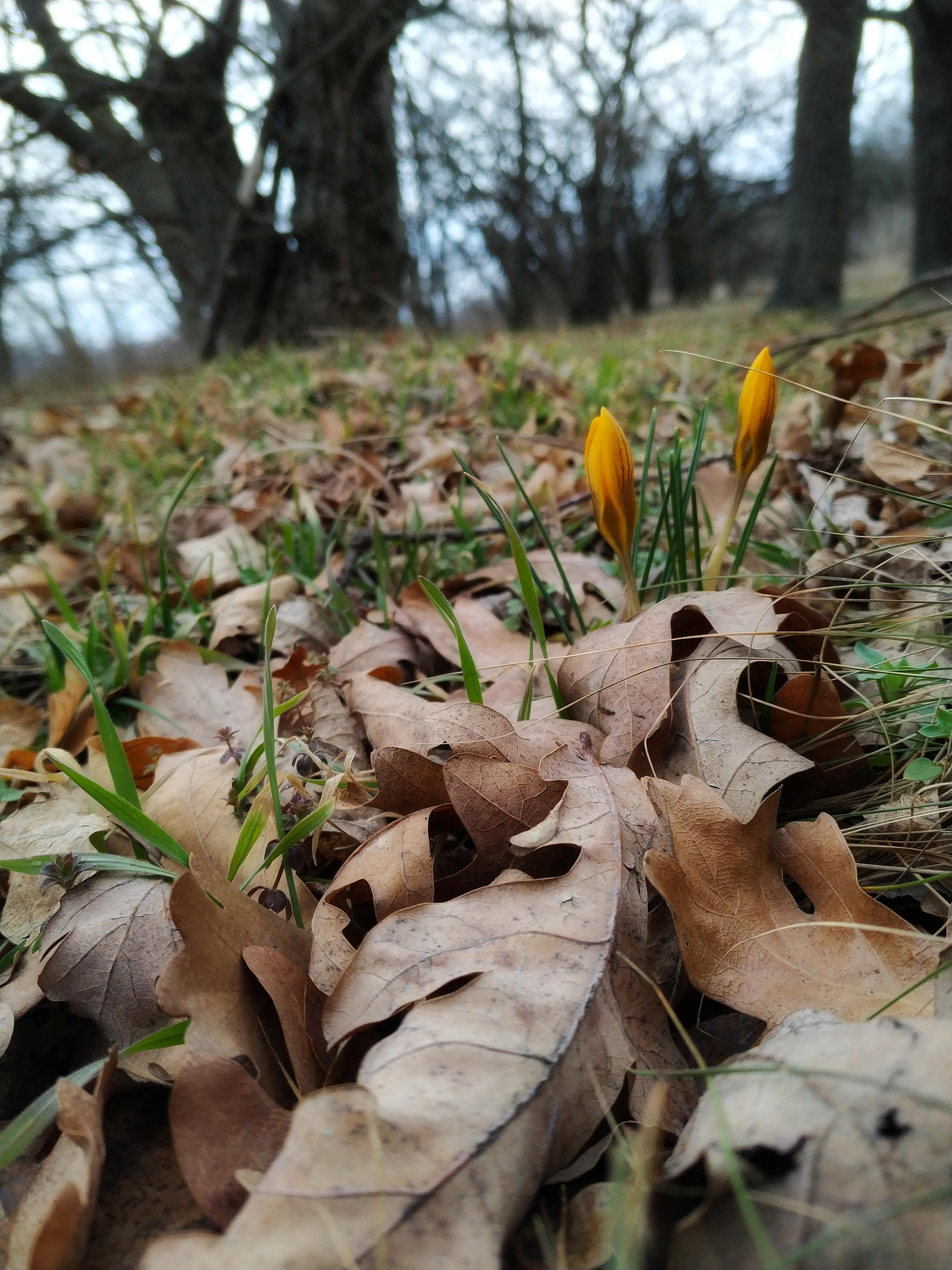 Весна на о. Хортица 🌱🌸