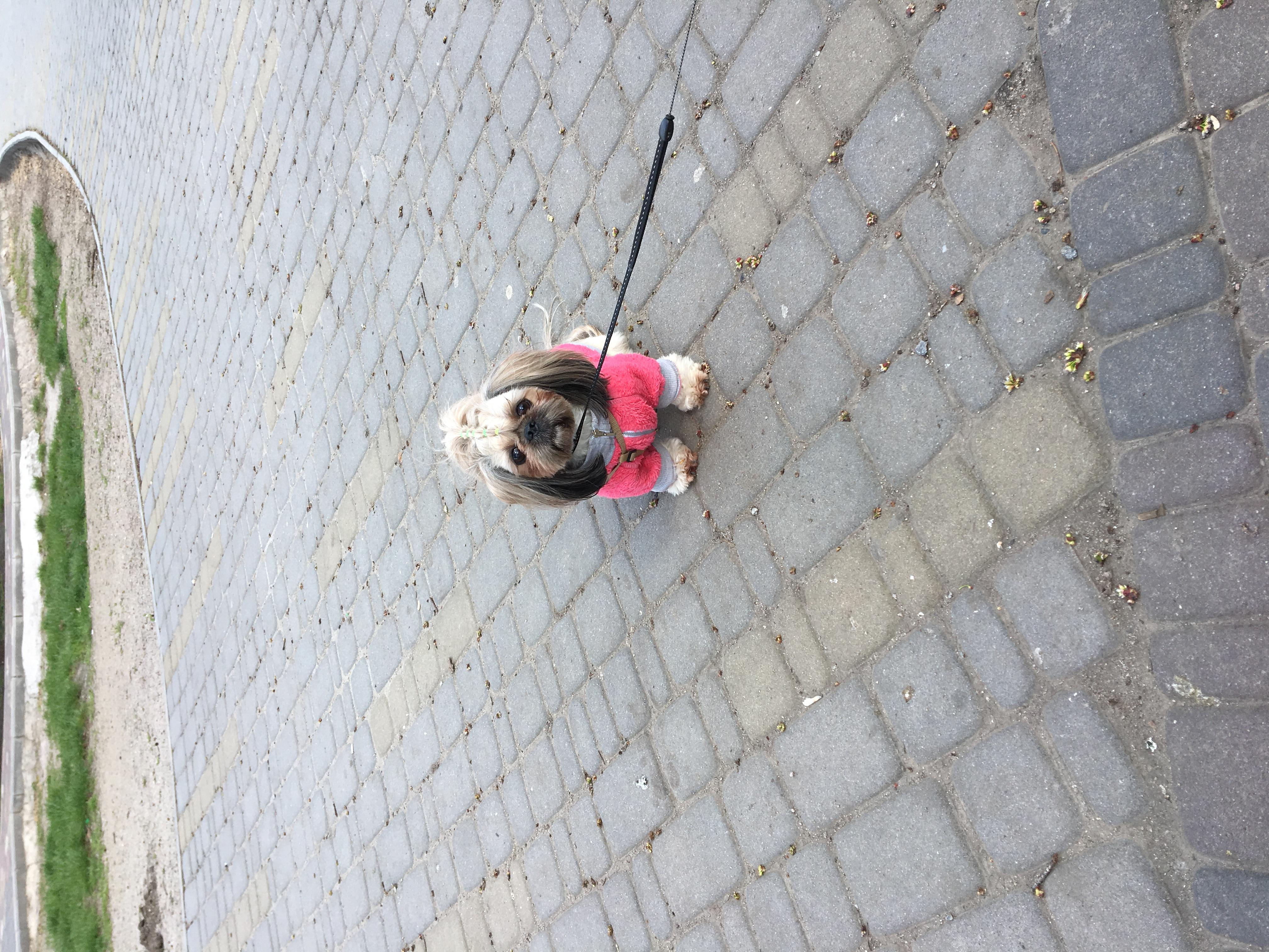 Ждем других собачек в парке